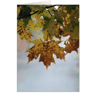 Cartão Folhagem de outono