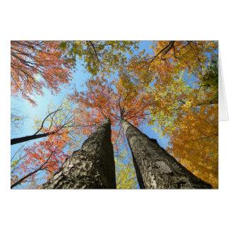Cartão Folhagem de outono que olha acima 2