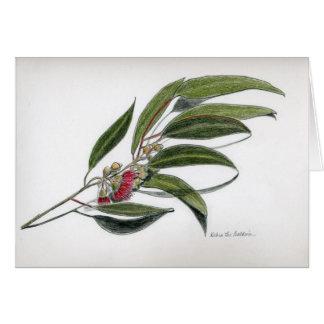 Cartão Folhas do eucalipto