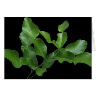 Cartão Folhas do limão do Kaffir