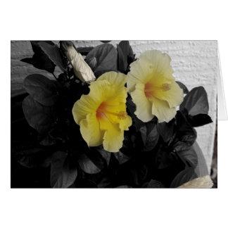 Cartão Foto a cores seletivo personalizado do hibiscus