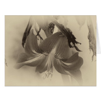 Cartão Foto antiga personalizada da flor do Amaryllis