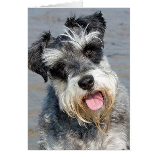 Cartão Foto bonito do cão diminuto do Schnauzer na praia
