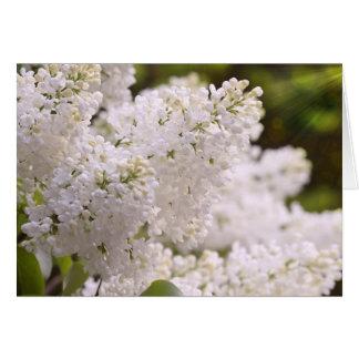 Cartão Foto branca bonito dos Lilacs