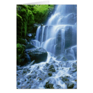 Cartão Foto da multa da cachoeira do Rio Columbia