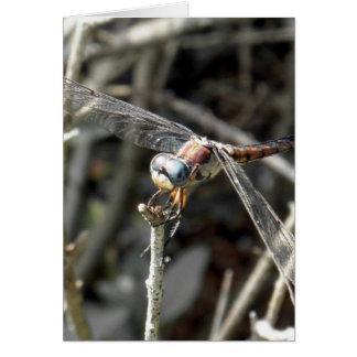 Cartão Foto de bronze da libélula das libélulas de Brown