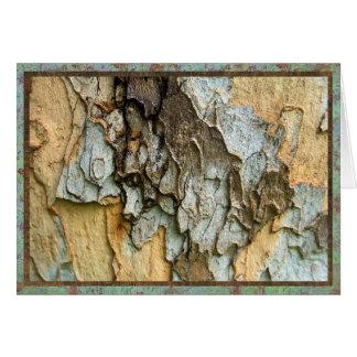 Cartão Foto do latido de árvore do sicômoro