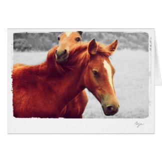 Cartão Foto dos cavalos