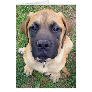Cartão Foto inglesa bonito do cão do Mastiff da senhorita