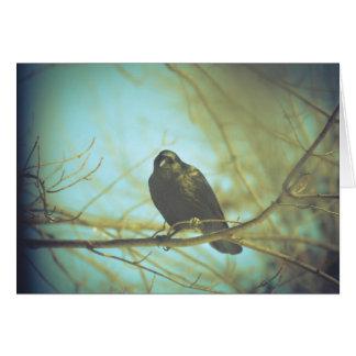 Cartão Foto lindo do corvo