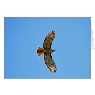 Cartão Foto Vermelho-Atada do falcão