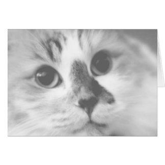 Cartão Fotografia BONITO SUPER do retrato do gato