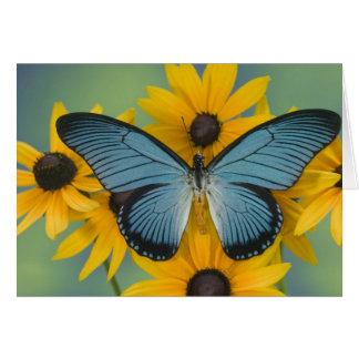 Cartão Fotografia de Sammamish Washington da borboleta 22