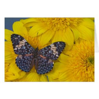 Cartão Fotografia de Sammamish Washington da borboleta 43