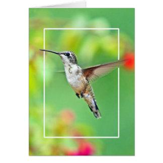 Cartão Fotografia do colibri