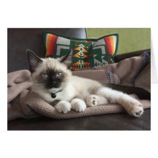Cartão Fotografia do encanto do gatinho