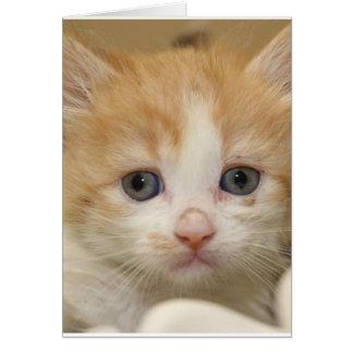 Cartão Fotografia do Exclusive dos animais de estimação