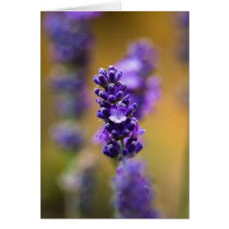 Cartão Fotografia do macro da flor da lavanda