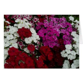 Cartão Fotografia floral do cravo-da-índia branco,