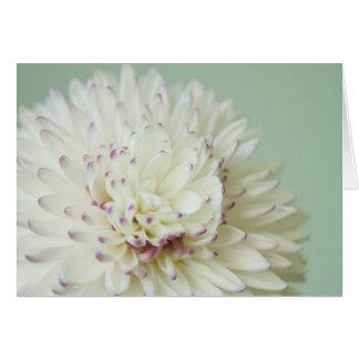 Cartão Fotografia Pastel macia da flor