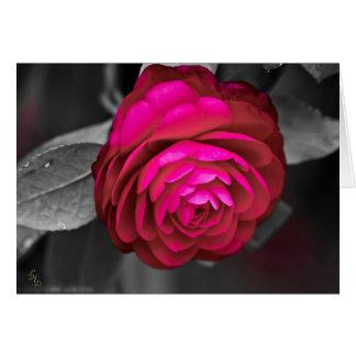 Cartão Fotografia rosado de Lee Hiller da camélia