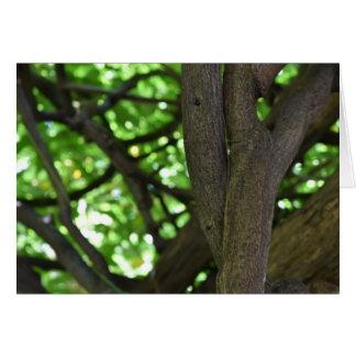 Cartão Fotografia verde da natureza da árvore do Pergola