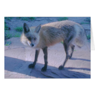 Cartão Fox vermelho no patamar