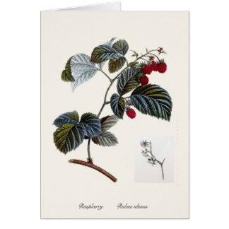 Cartão Framboesa