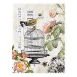 Cartão francês do pássaro do vintage cartão postal