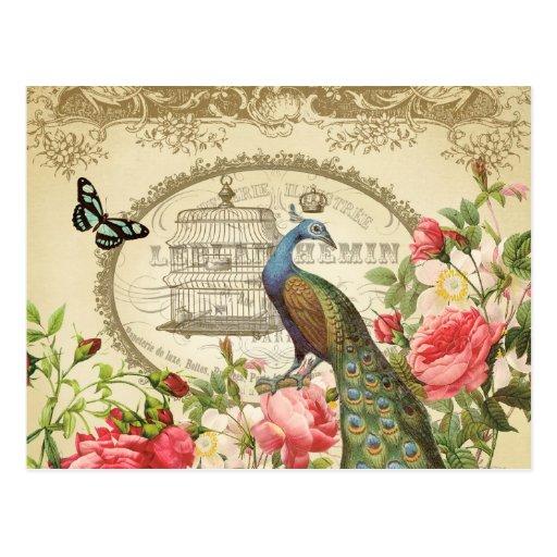 Cartão francês do pavão do vintage cartões postais