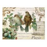 Cartão francês dos pássaros do vintage cartão postal