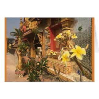 Cartão Frangipani no wat em Chiang Mai, Tailândia