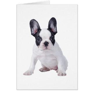 Cartão Frenchie - filhote de cachorro do buldogue francês