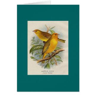 Cartão Frohawk - passarinho do açafrão