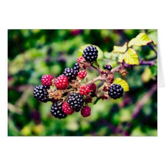 Cartão Frutas selvagens