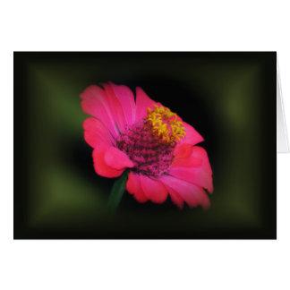 Cartão Fulgor cor-de-rosa do Zinnia