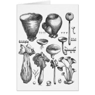 Cartão Fungos