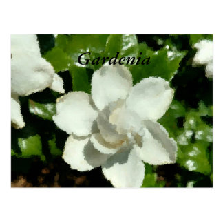 Cartão Funky do Gardenia