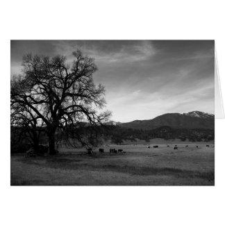 Cartão Gado ao norte de Stonyford, Colusa County, CA,