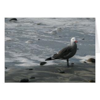 Cartão gaivota
