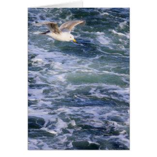 Cartão Gaivota na água