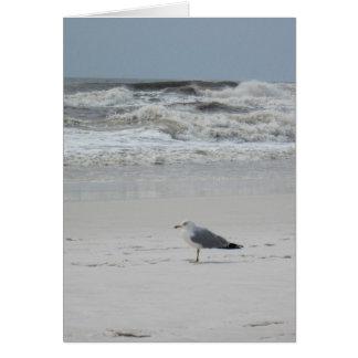 Cartão Gaivota na praia
