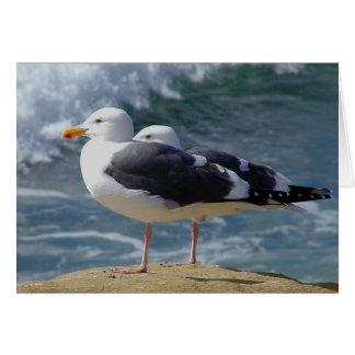 Cartão Gaivotas na costa