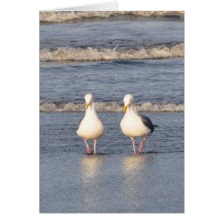 Cartão Gaivotas que dão uma volta na praia