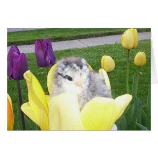 Cartão galinha em uma tulipa