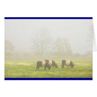 Cartão Galloway cercado acobarda a pastagem no campo de