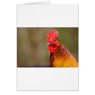 Cartão Galo com cabeça vermelha do pente