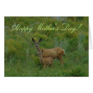 Cartão Gama e jovem corça dos cervos de mula D0005