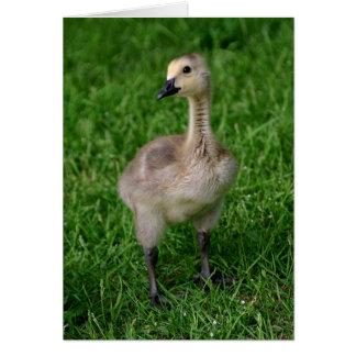 Cartão Ganso Gosling Notecard de Canadá