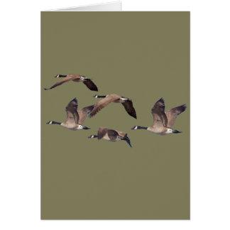 Cartão Gansos em vôo
